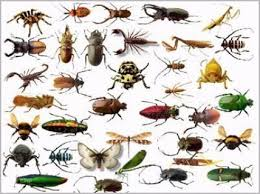 Insects in the home pictures