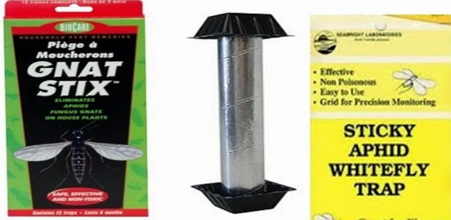 3 most used yellow sticks traps to kill fungus gnats and